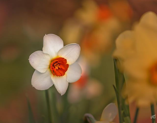 Spring in the Backyard