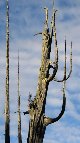 Tree skeleton on Tofino's Tonquin Trail, Canada