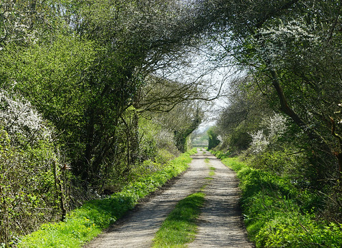 clevedon northsomerset england uk gb greatbritain outdoors sony a6000 nature tunnel sunshine green countryside path track road lane trees day spring shadows ilce6000 zeiss