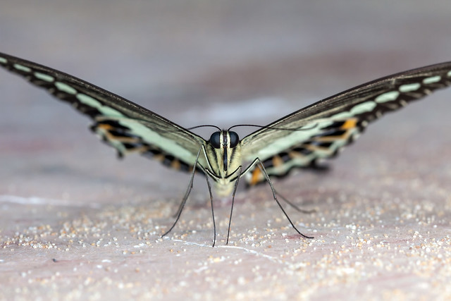 Attractive Barfly, pt. 2 - _TNY_3799