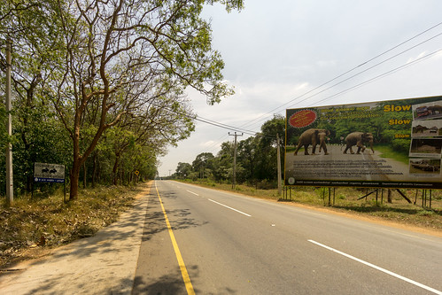 Elephants might cross | by seghal1