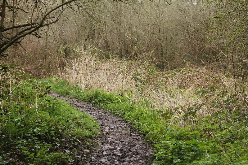 Coombe Brook Valley footpath