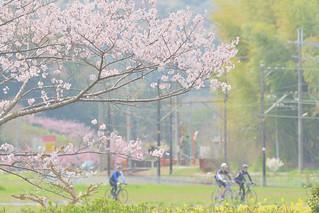 春うらら | by yasuyan