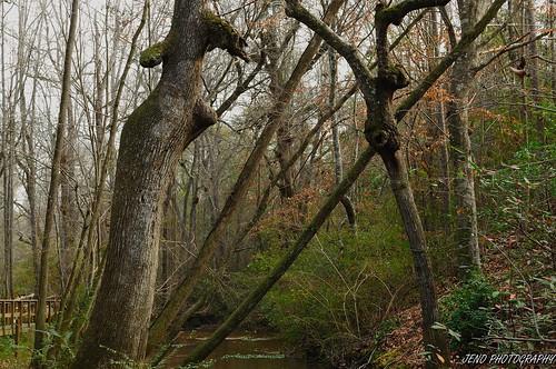 trees nature creek landscape nikon d5000