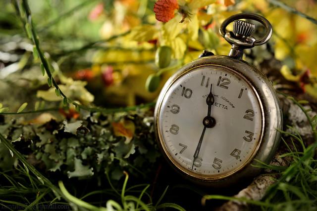 The watch of grandpa