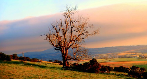 morning winter sky tree field branch martin time phillips wexford murt monasootha mygearandme rememberthatmomentlevel1