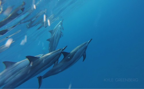 Spinner Dolphins | by Kage Greenland
