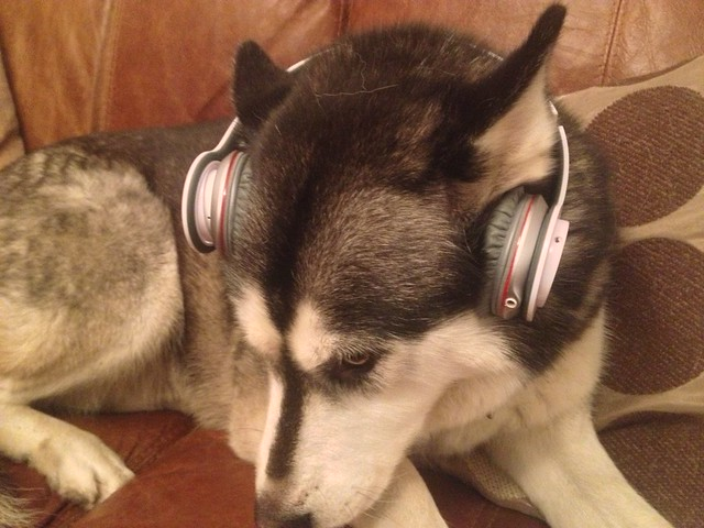 Miya chilling with some beats!