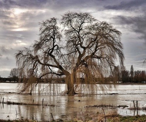 The weeping of the willow   by Broo_am (Andy B)