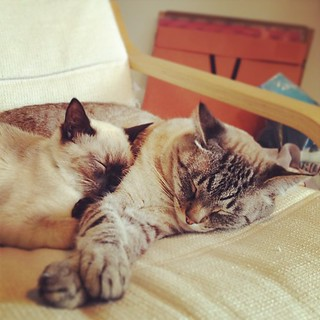 Even more cat snuggles.