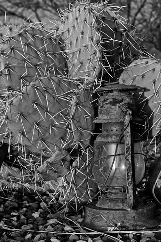 morning arizona cactus blackandwhite sun sunshine sunrise early sharp lantern needles pricklypear campverde