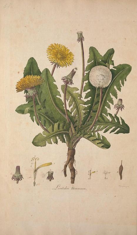 Flora Londinensis v.1