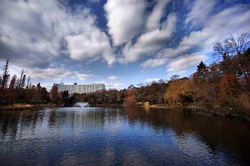 winter reflection japan photography tokyo pond sony 365 2012 公園 takashi 池 nex 噴水 三鷹 武蔵野 366 井の頭 kitajima turntable00000