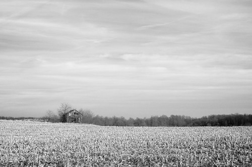 trees winter sky blackandwhite bw white black abandoned clouds barn cornfield alone lonely decrepit project365 ∞redloop∞