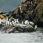 Nueva Zelanda, Isla Sur 43