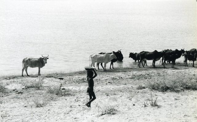 Mali, sur les rives du fleuve Niger