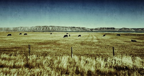 road trip travel autumn usa fish haven mountains canon driving cows hwy idaho fields textured 89 g11 snapseed