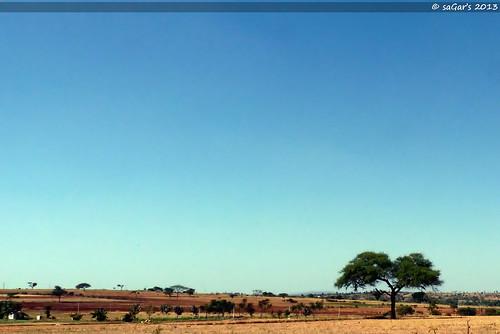 sky tree landscape lumix solitude alone bangalore bluesky kerala panasonic fz 38 trivandrum prosumer sagars gopalswamibetta fz35 lumixfz35 panasoniclumixfz3538 sandeepsagars himvadgopalswamibetta