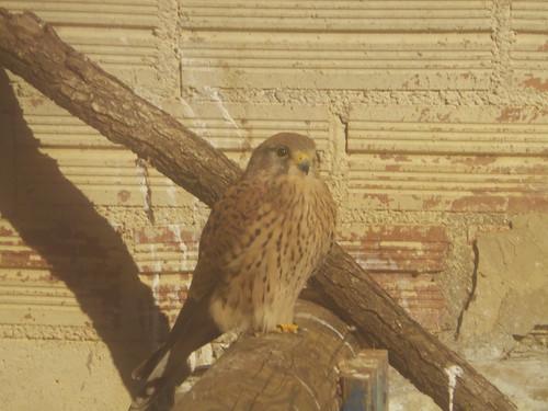 Falcons in Spanish Wildlife Sanctuary | by Rayya The Vet
