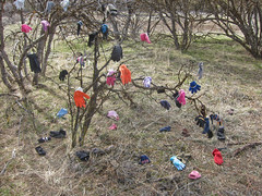 Glove Tree - Moore Park, Klamath Falls, Oregon