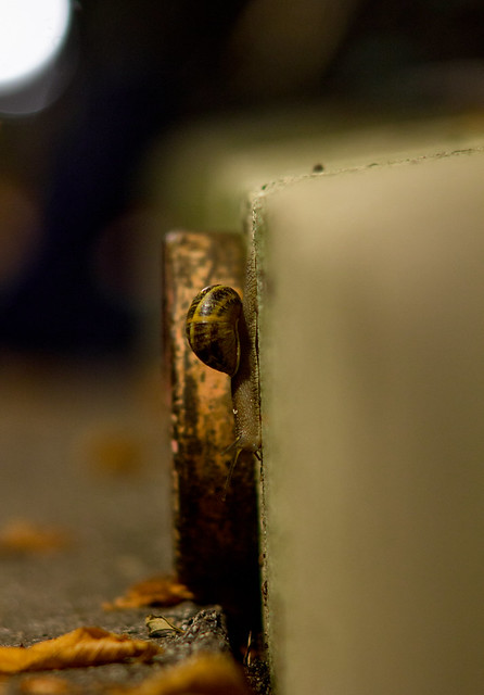 Snail in the City