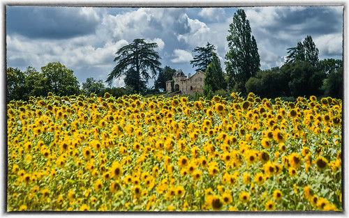 Summer dream - Dordogne -SW France | by TM Photography Vision