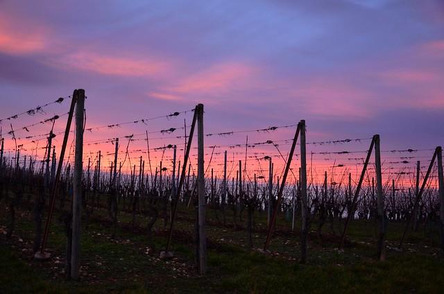 « Une bouteille de nos vignes, Et, avec elle, une aimable fille, Y-a-t-il de meilleurs briseurs de soucis Que l'amour et le vin d'Alsace ? » de Joseph Graf
