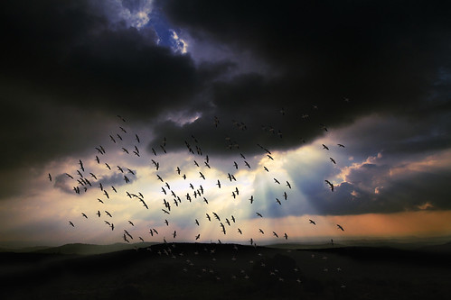 light mountains nature birds clouds sunrise landscape dawn scenery day gaby cloudy bernstein cloudmass jerusalemmountains greatwhitepelicans bernsteingaby gabybernstein