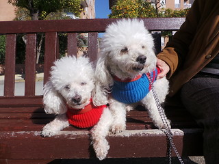 Dogs in Barcelona and Florence | by Rayya The Vet