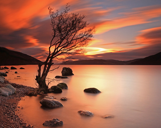 Lone Tree at Sunset.