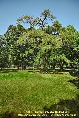 pakistan reflection tree green fauna garden healthy alone soul punjab lahore jinnahpark lawrancegarden mygearandme