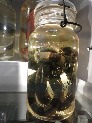 Sea snake in a jar | by Breeonne Baxter
