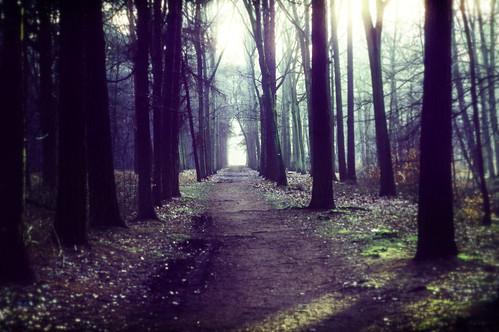 wood morning blue trees winter sunset sun mist tree grass leaves forest sunrise glow shine fairy tale