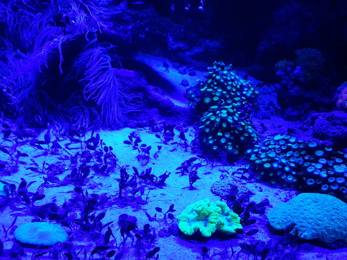 Anemones and plants under black light | by Nicolas Demers