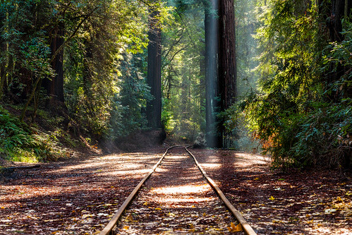 california railroad forest unitedstates adventure felton
