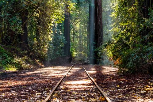 california railroad forest unitedstates adventure felton