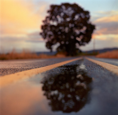 sunset reflection tree film oregon analog square hasselblad pacificnorthwest sauvieisland centerline middleoftheroad htt doubleyellowline hasselblad500c bluemooncamera forgivemethetitle itwasthebestthatpoppedintomyheadonshortnotice