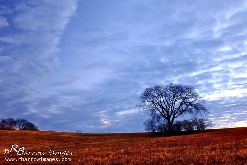 blue tree clouds sunrise dawn tn nashville fild bellsbendpark
