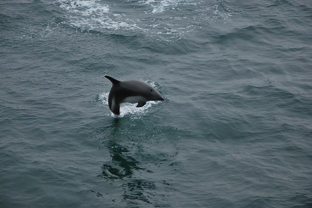 Mi querido Delfin