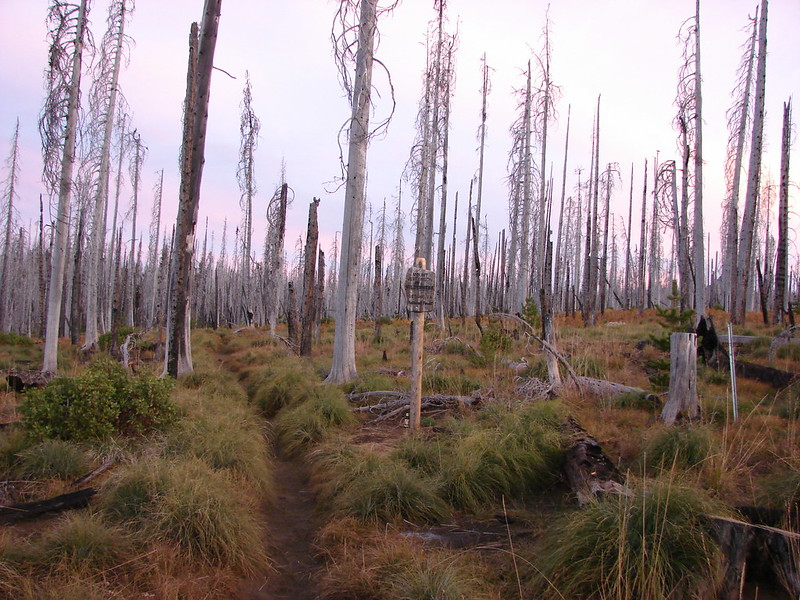 Entering the Mt. Jefferson Wilderness on the Pacific Crest Trail