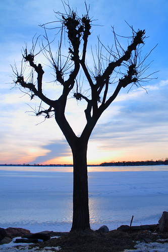 morning blue white tree ice nature silhouette wisconsin clouds sunrise madison
