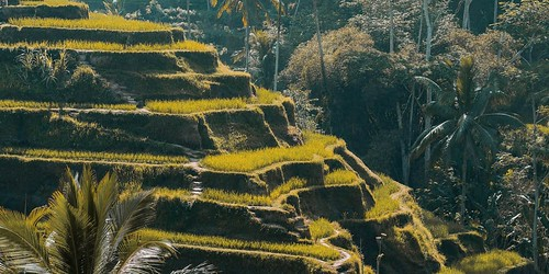 Ubud One Day Tour | by Balitourify