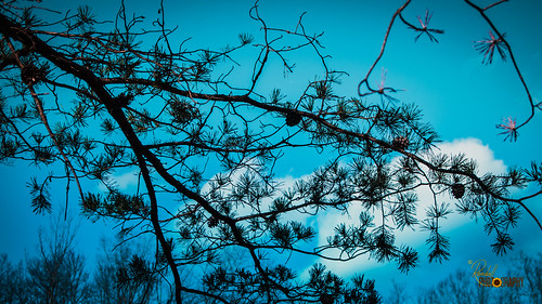 saveearth epl1 north northcarolina olympus stonemountainstatepark traphill us unitedstates amazing beautiful blue branch interesting landscape nature nice oldtrees outdoor outdoors park photo photographer photography pic picture pinecones pinetree relax relaxing sky tree trees turquoise up