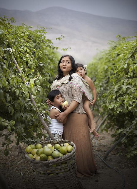 Passion fruit Farm
