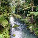 Nueva Zelanda, Isla Norte 43