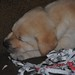 Bosworth x Cava Litter, 11.11.12
