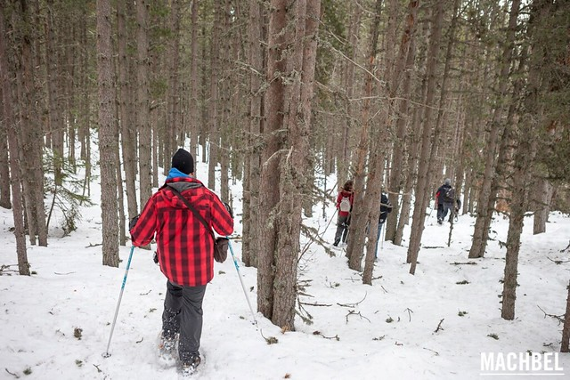 Caminando con raquetas de nieve en un bosque de Andorra