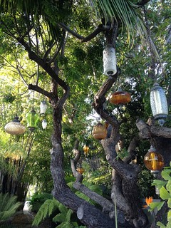 Lanterns on tree | by Martine Pagé