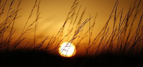 nature sunset grass wild uk oxford autumn