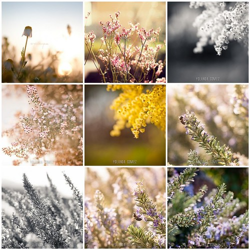 Flores   by yoop_